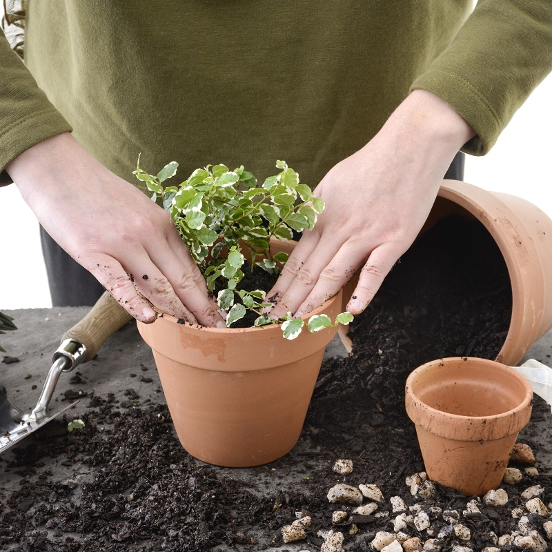 5 Gardening Ideas to Improve Your Gardening Business