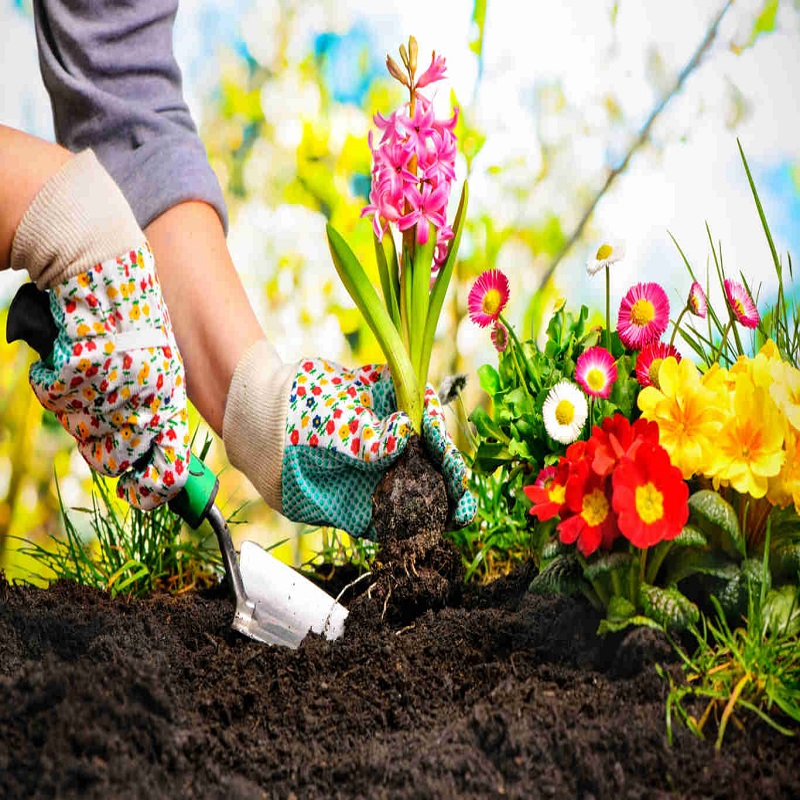 5 Hard Truths About Gardening Feature | Bulb And Key
