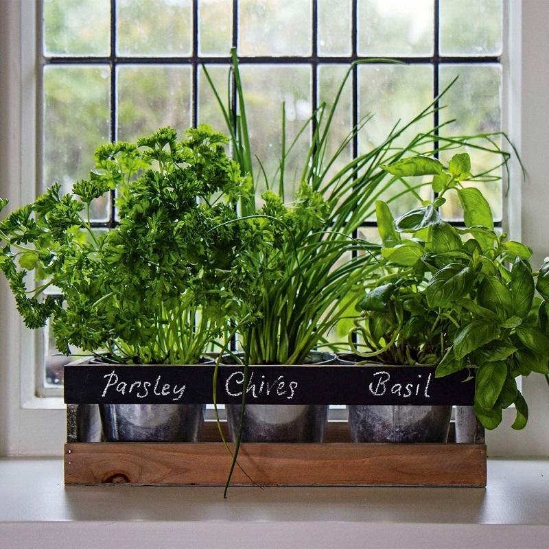 A Must Have: Kitchen Garden